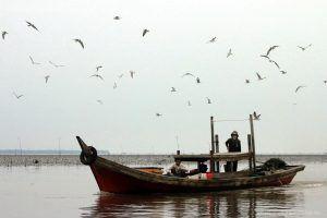 keanekaragaman hayati daerah pesisir