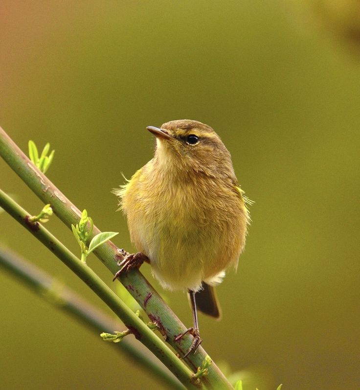80 best oiseaux du jardin images on pinterest birdhouses for Oiseaux du jardin