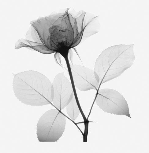 form in art google search form pinterest siebdruck perspektive und hintergrundbilder. Black Bedroom Furniture Sets. Home Design Ideas