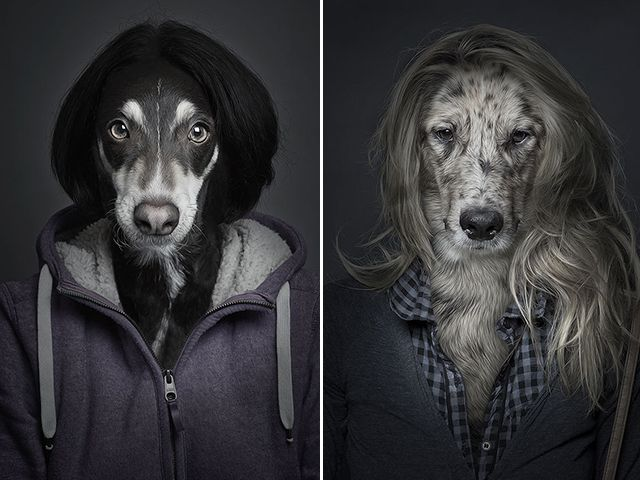 Swiss photographer Sebastian Magnani splices canine faces onto their owners' bodies. Very unique