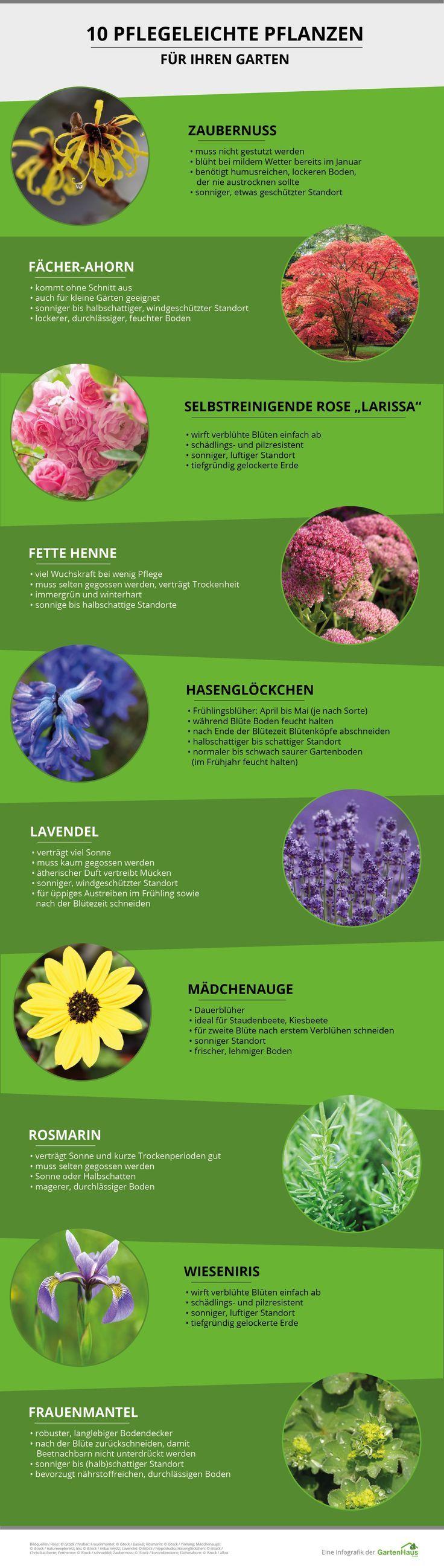 Great Lästige Gartenarbeit Adé: Gestalten Sie Ihren Garten Pflegeleicht U0026  Entdecken Sie 10 Pflegeleichte Pflanzen U2013