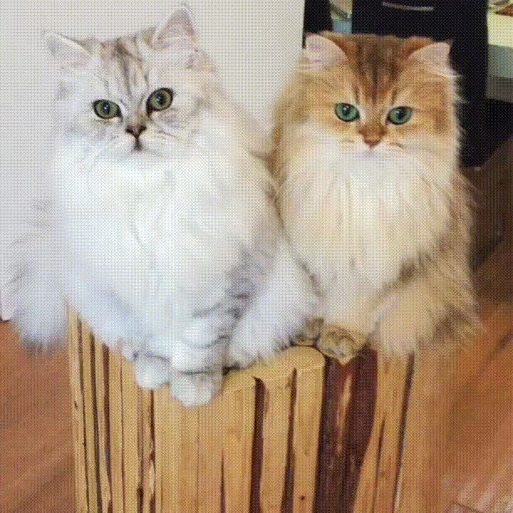 Their eyes are looking right into my soul http://ift.tt/2gcIh9S