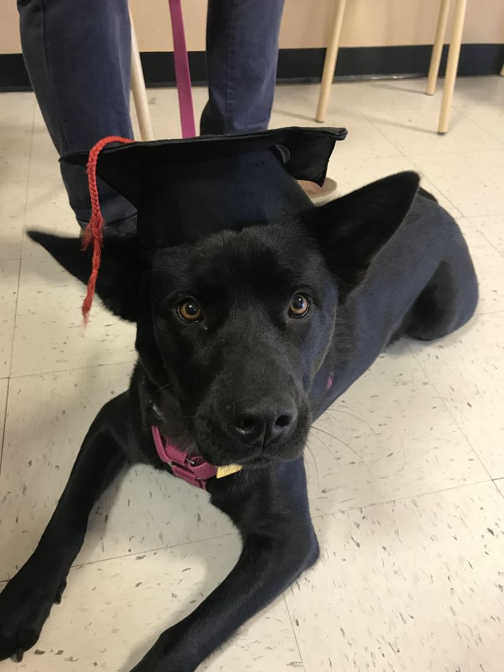 This is Phoebe after graduating puppy obedience classes last weekend. Shes the best girl. http://ift.tt/2tndLRe