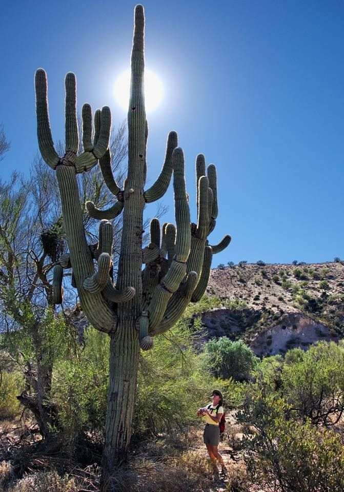 484 Best Images About Saguaro Np American National Parks