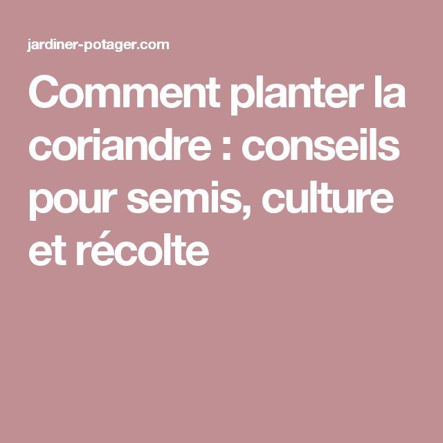 Comment planter la coriandre : conseils pour semis, culture et récolte