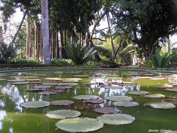 Jardín Botanico del Puerto de la Cruz, en #Tenerife
