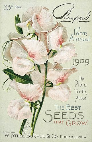 Burpee 1909 Front Cover | Flickr - Photo Sharing!