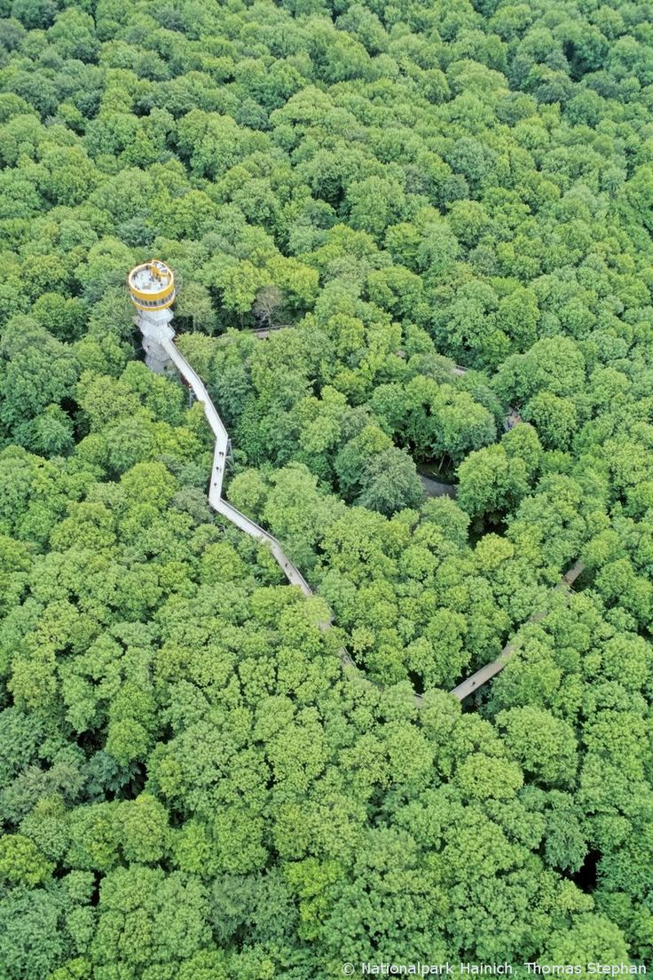 Hainich National Park, unspoiled wilderness in Germany. #germany25reunified Enter the #InspiredBy Pinterest Contest for your chance to win a trip to Germany!