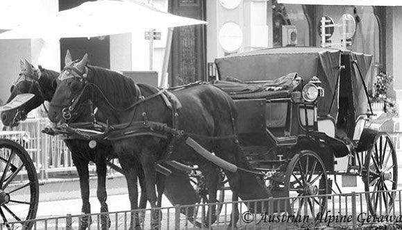 Vienna of old.  A ride reminiscent of Christmas past in a romantic fiaker.   #cityscapes #fiaker #vienna #wien #vienna_city #welovevienna #austria #österreich #architecture #viennatouristboard #ViennaNow #ViennaGoForit #wanderlust #fernweh #travelphotography #blackandwhite #travel #photooftheday #theglobalwanderer #discoveraustria #365austria #österreich #austriavacations #visitaustria #austrianblogger #travellerau #tw #pin