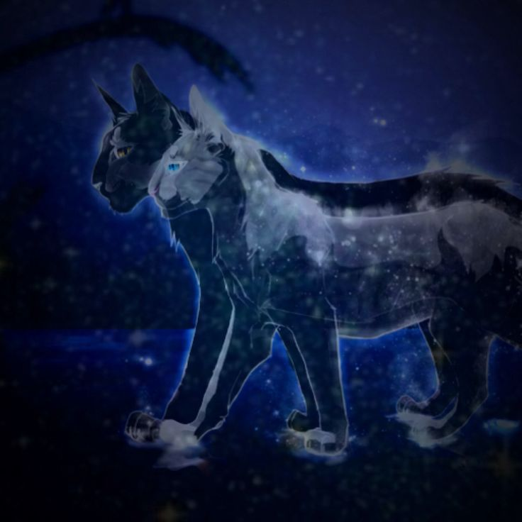 Warriors Erin Hunter Lost Stars: 17 Best Images About Silverstream On Pinterest