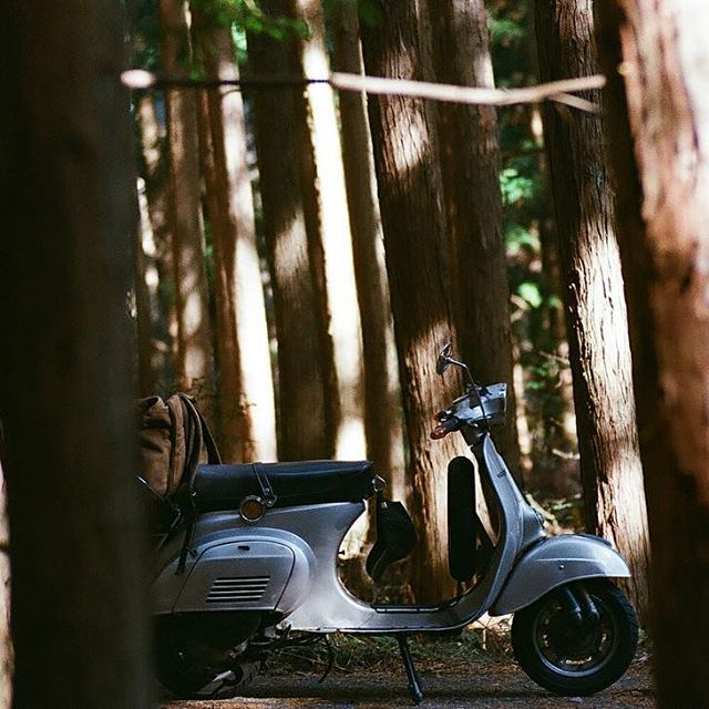 【sgrgb】さんのInstagramの写真をピンしています。《#Vespa#et3#Vespalife#vespalifestyle #森#林#木漏れ日#nikon#f3#film#filmphotogfaphy#kodak#kodakultramax400#撮って出し》