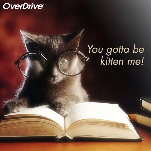 What a bibliophilic cat!