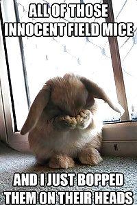 Little Bunny Foo Foo!