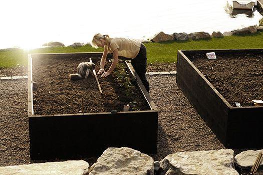 Köksväxtträdgård-Victoria Skoglund