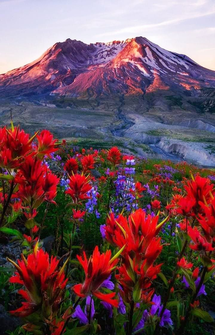 Pin By Patricia Mcclary On Earth Laughs In Flower Landscape Photography Nature Photos Beautiful Landscapes