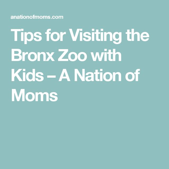 Tips for Visiting the Bronx Zoo with Kids – A Nation of Moms