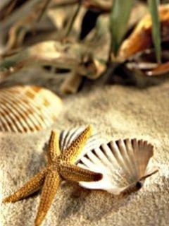 Sea Shells: Shells Nature, Starfish Seashell, Sea Shells, Cute Idea, Mobiles Wallpapers, Selling Seashell, Shells Mobiles, Pretty Seashell, Sea Shore