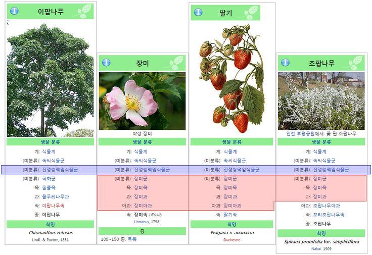 이팝-장미-딸기-조팝 비교