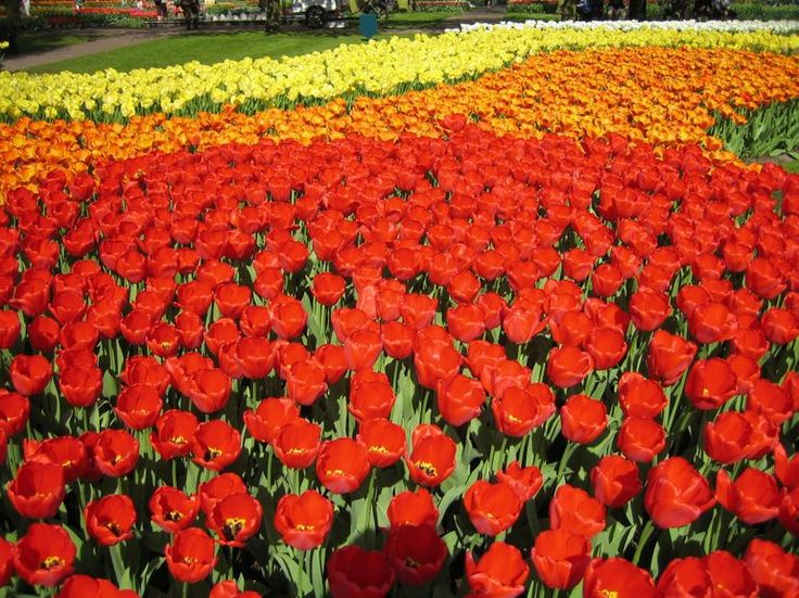 Good Keukenhof Gardens Netherlands A never ending road of brightly colored tulips Photo of Keukenhof Gardens and Tulip Fields Tour from Amsterdam by Viator