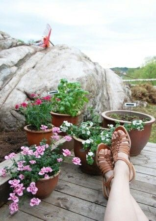Hage - urter - blomster - gleder meg til vår!