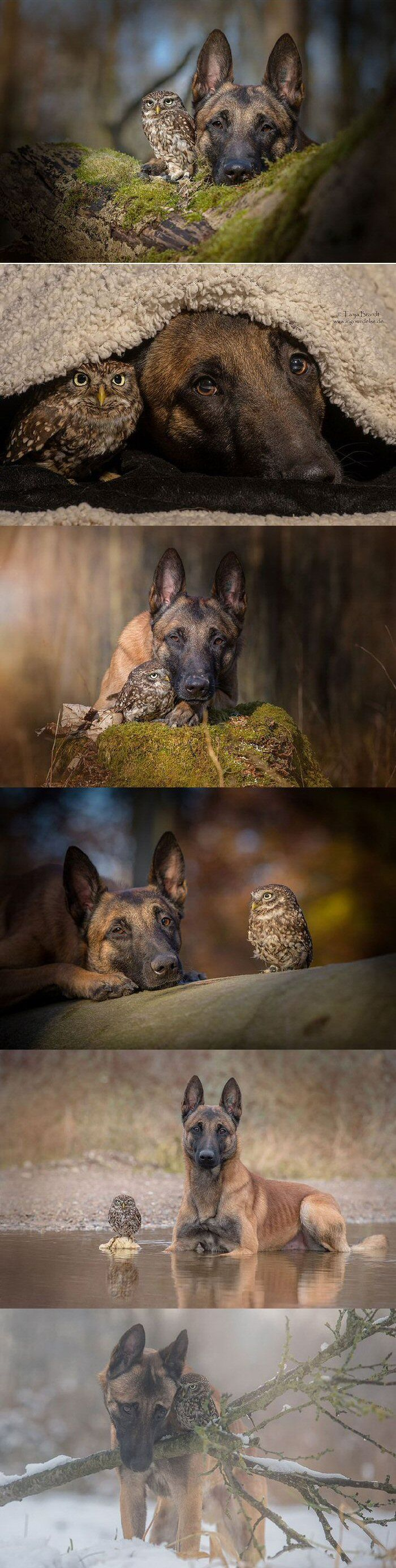 Ingo the Shepherd and Poldi the Owl (dog, owl)