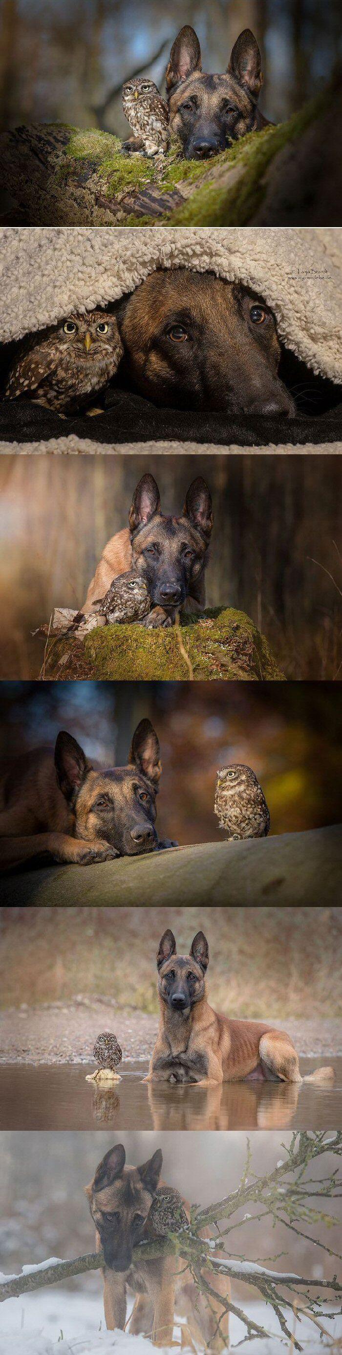 Ingo the Shepherd and Poldi the Owl (dog, owl)