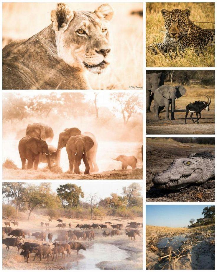 Sensational Savute #Botswana #wildlife #safari