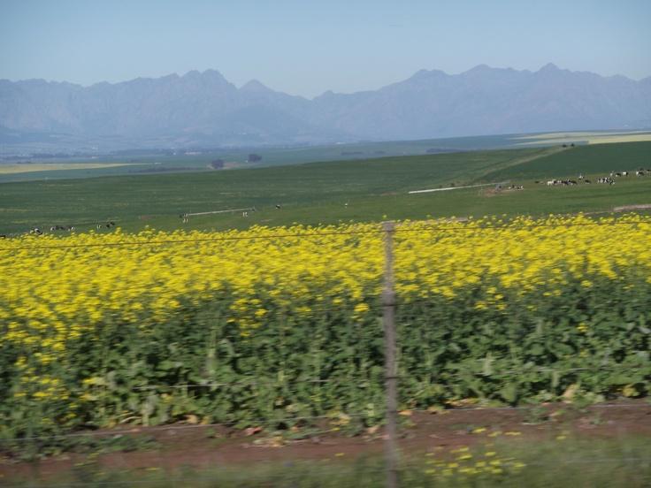 On the way to Kalbaskraal