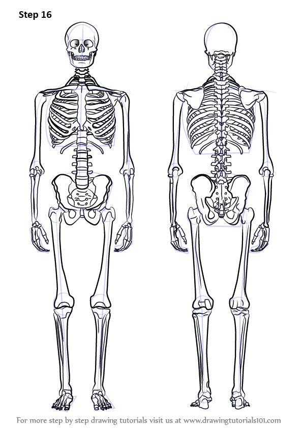 369 best skelaton images on pinterest | figure drawing, anatomy, Skeleton