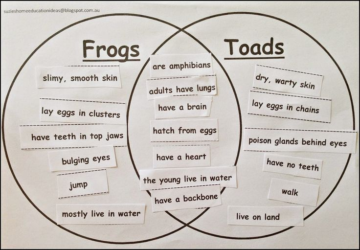 15 Best Frogs Images On Pinterest Frogs Animales And Frog And Toad