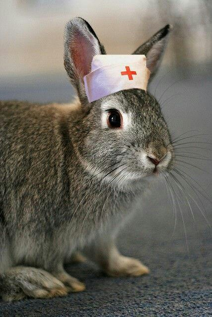 Nurse Rabbit. Meant to be funny, but some very bonded house rabbits will adopt a caretaker role when one of their human companions is sick.