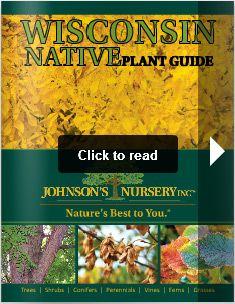 Johnsonu0027s Nursery, Inc. Native Plants Of Wisconsin