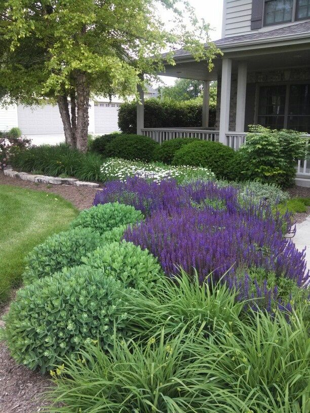Front landscape bed; day lilies' salvia, sedum, mini shasta daisy, burning bush, dense yews. In front of rocks were pink phlox but the bunnies ate them:(
