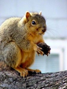 How to stop squirrels in your garden squirrely - How to keep squirrels from digging in garden ...