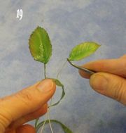 Making A Rose Leaf