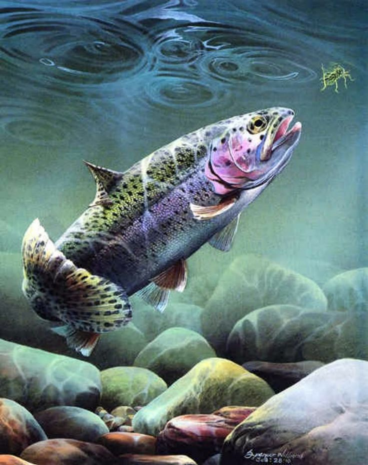 803 Best Art Fly Fishing Images On Pinterest