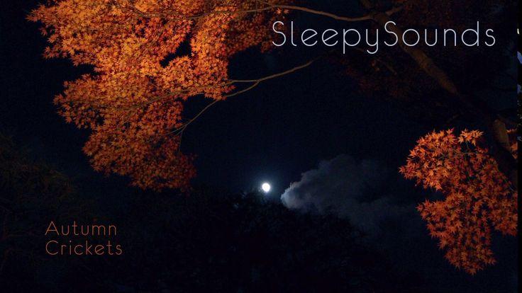 Autumn Crickets - 9-Hour Sleep Sound - Fall Cricket Song