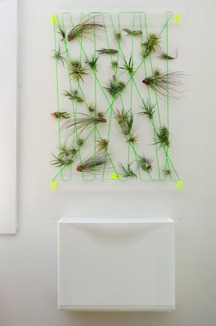 17 best images about aerium air plants on pinterest for Air plant wall art