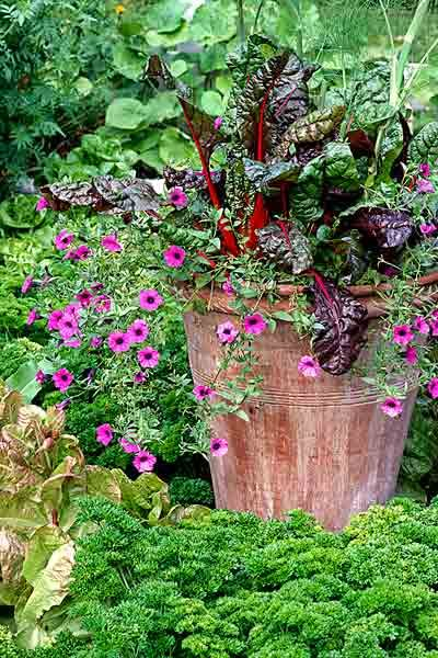 What they do need, usually, is at least 6 hours of sun a day along with well-drained soil and plenty of water. In general, this means pairing them with heat-and-sun-loving ornamentals with similar moisture needs, although there are exceptions. Shown: Pink petunias pop against the dramatic hues of 'Charlotte' Swiss chard.