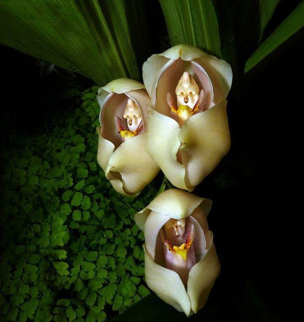 orquideas incriveis - Pesquisa Google