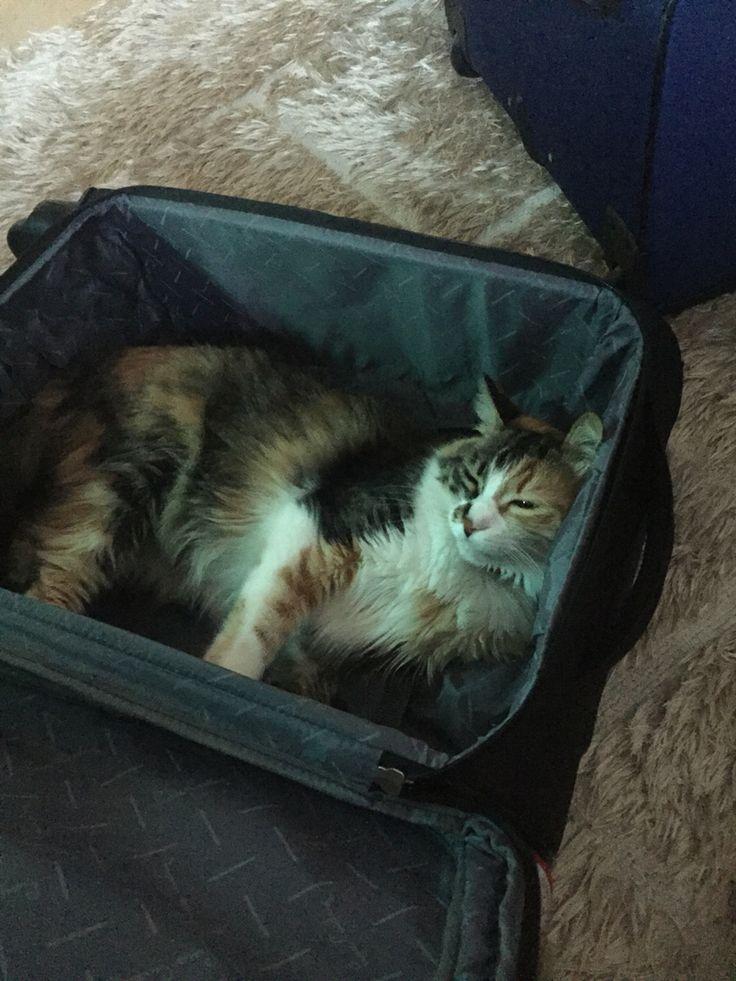 Bavul sefası