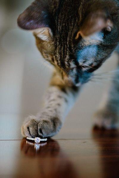 Cute engagement photo idea. Involve your pets!