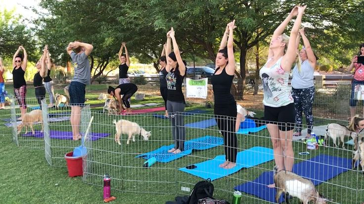 foxnewsonline@foxnews.com (Fox News Online)   Yoga's foundations can be traced back thousands of years, and the practice has taken many different forms during that time. But one class in Las Vegas is expanding that definition to include goats. Goat Yoga Las Vegas is a petting zoo of sorts... - #Combines, #Cut, #Foundations, #Goat, #News, #Yoga