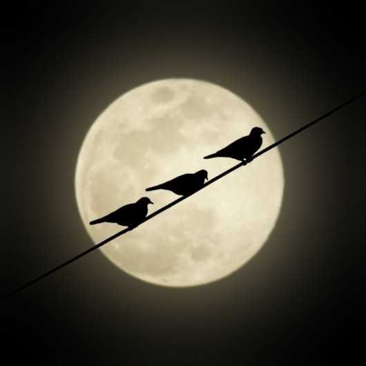 Blackbirds Moon