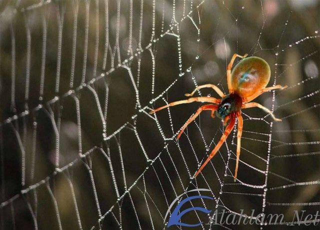 تفسير رؤية خيوط العنكبوت في المنام حلم خيوط العنكبوت حلم خيوط العنكبوت للحامل حلم خيوط العنكبوت للشاب Spider Pet Spider Spirit Animal Totem