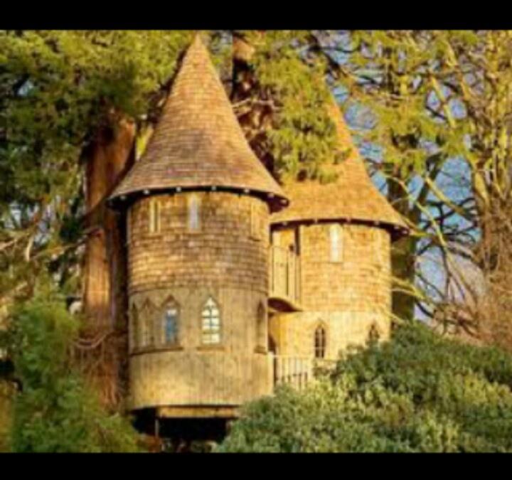 dream treehouses