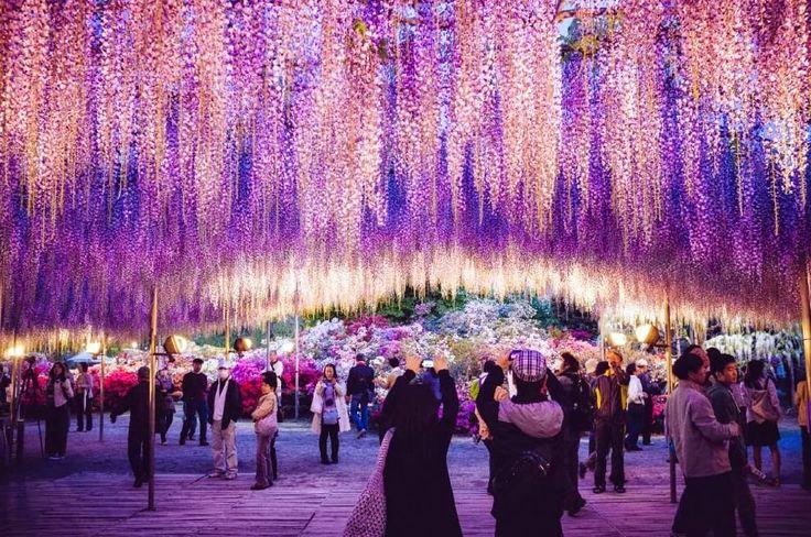 L'albero di Avatar esiste davvero e si trova in Giappone! ~ Asia Notizie