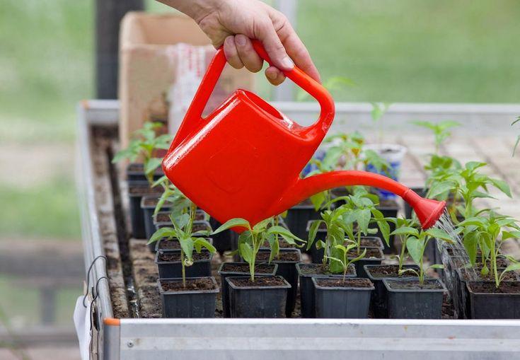 Несколько народных способов применения йода на даче   удобрения