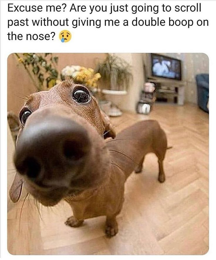 25 Funny Dog Memes That Will Keep You Laughing For Hours
