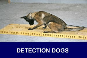 #detection #workingdog #training #K9
